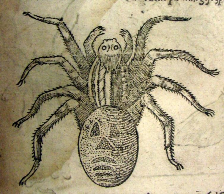 Illustration from: Insectorum sive minimorum animalium theatrum by Thomas Moffett, 1634