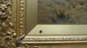 as you can see we got a free spider with our painting. aparently it had been there for some years so was beyond rescue