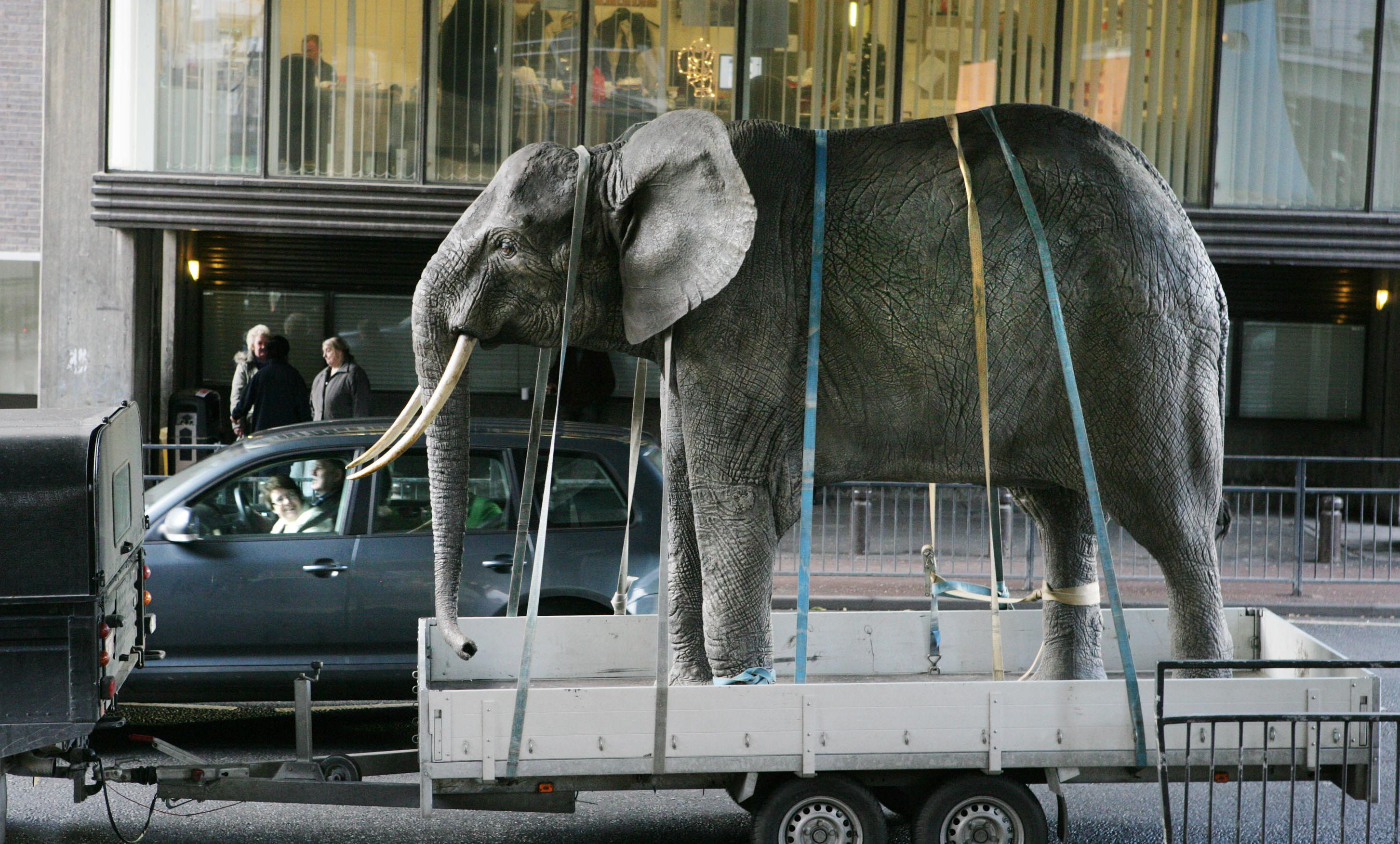 The life size elephant arriving at the new museum