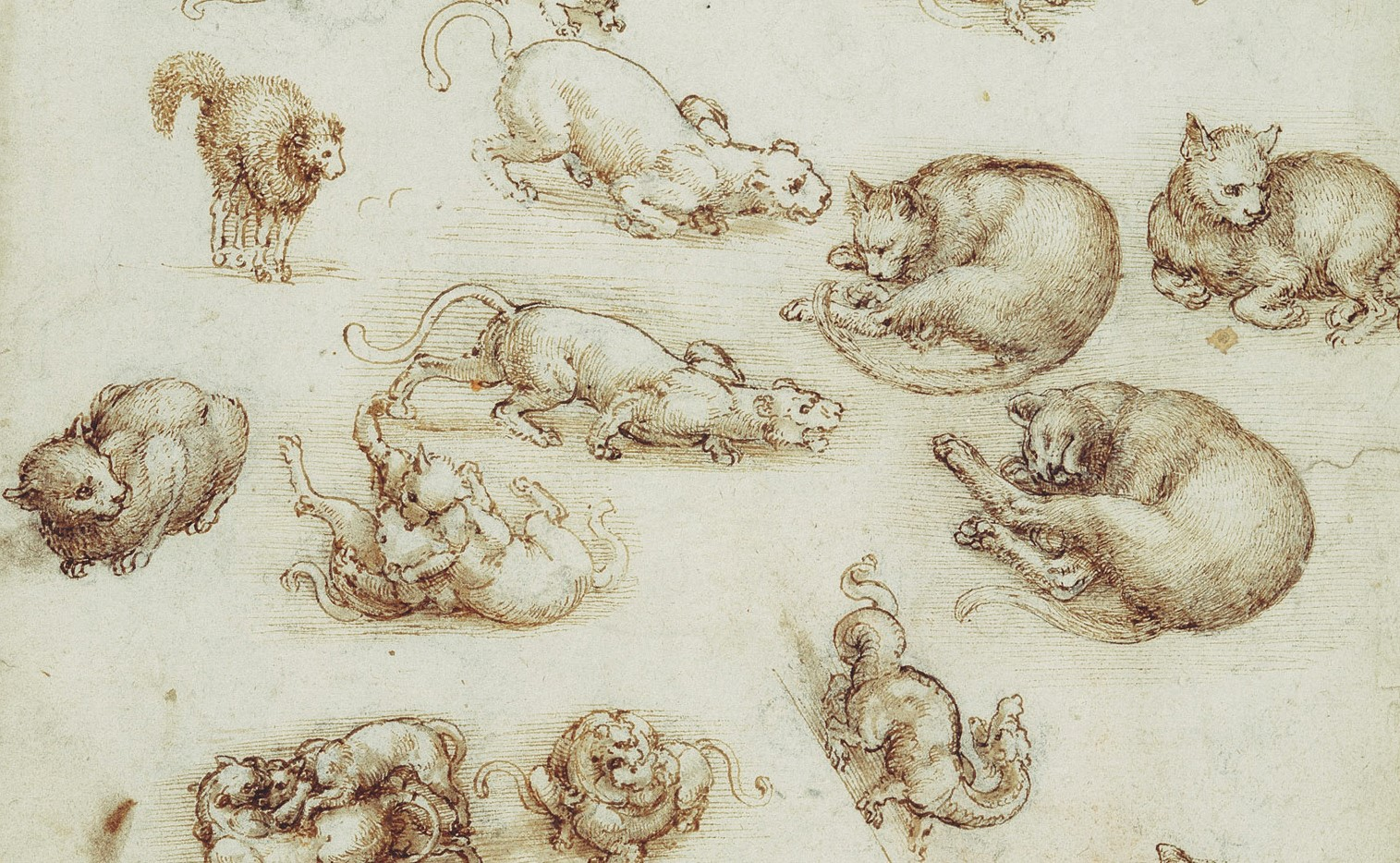 Ten Drawings by Leonardo da Vinci, star of the Renaissance, at the ...