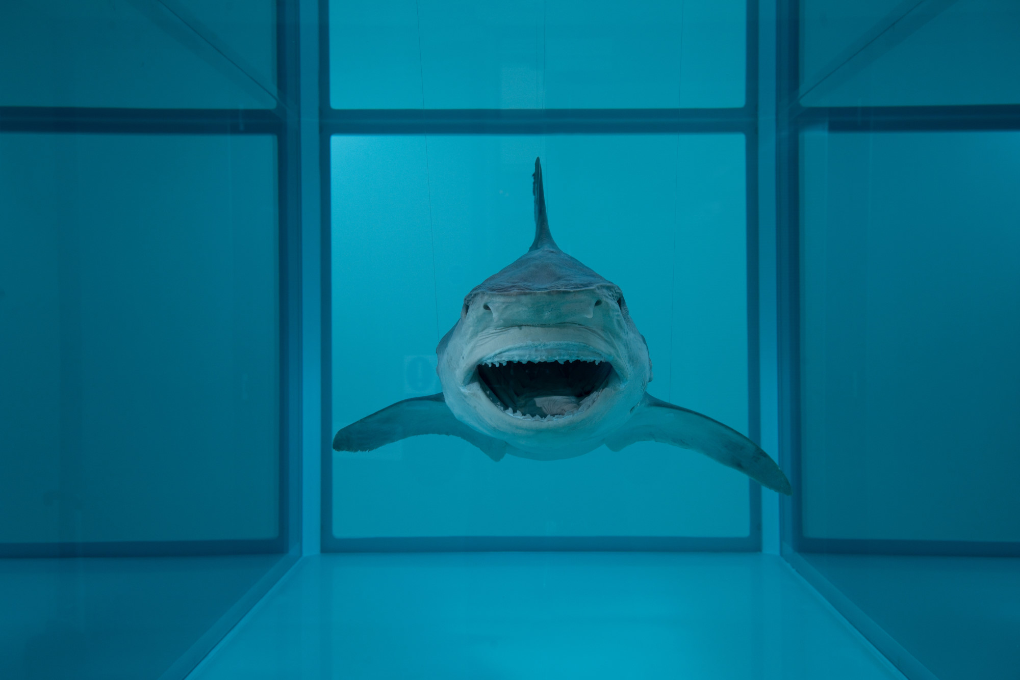 Heaven by Damien Hirst